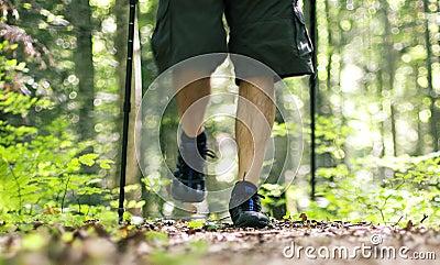 Caminhada através da floresta