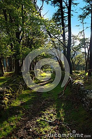 Caminhada da floresta