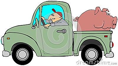 Caminhão que reboca um porco