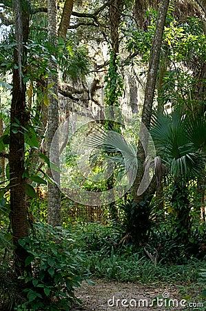 Caminho tropical idílico