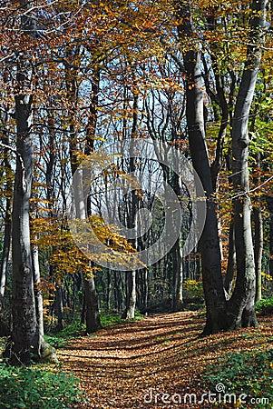 Camino de bosque del otoño