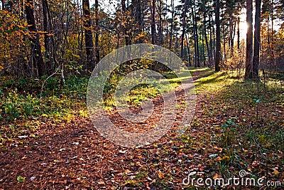 Camino de la suciedad en bosque del otoño