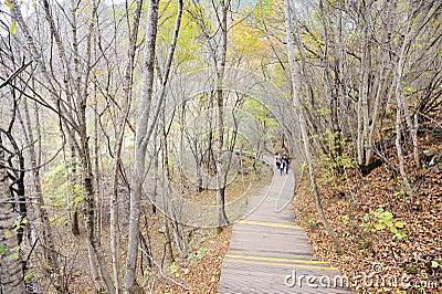 Camino de madera en bosque del otoño