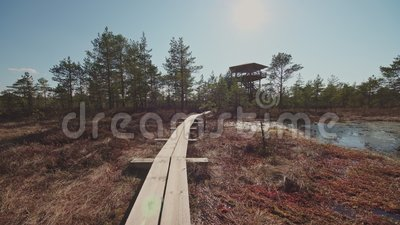 Camino de madera hermoso en el pantano almacen de video