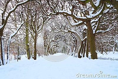 Camino en el parque en el invierno nevoso