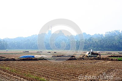 Camion caricato fieno nel mezzo del campo di risaia