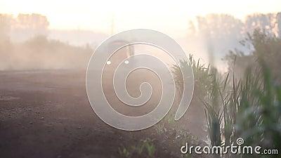 Camion traversant la forêt brumeuse clips vidéos