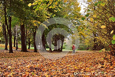 Camminando in legno di autunno