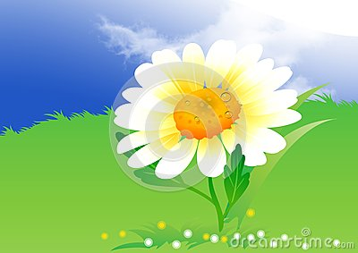 Camomile on clouds background