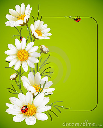 Free Camomile Frame Stock Image - 15131201