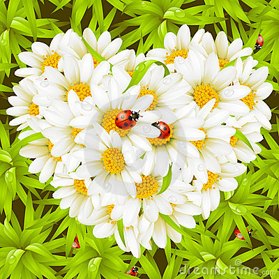 Free Camomile Heart, Ladybugs And Seamless Background Royalty Free Stock Photography - 13518807