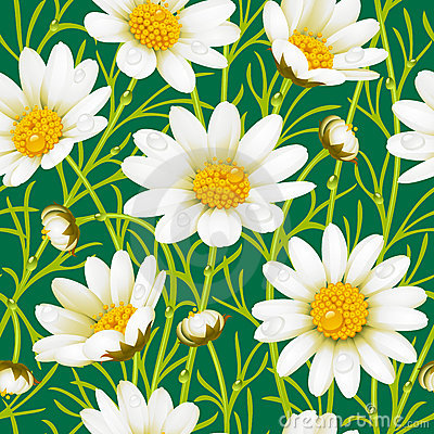 Free Camomile Seamless Background Stock Images - 15607204