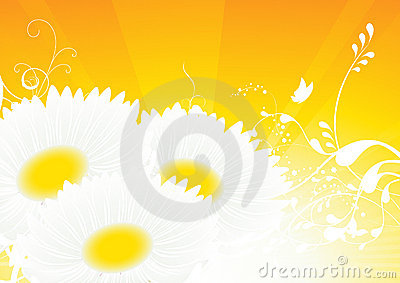 Camomile yellow background