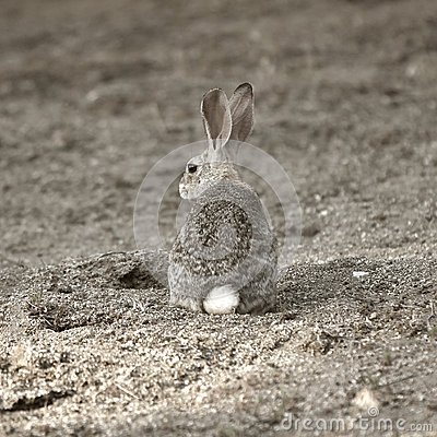 A camouflaged rabbit.
