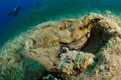 Camouflaged stonefish in the foreground