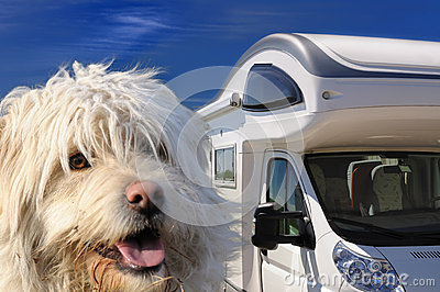 Camper and dog