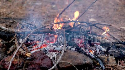Campfire in the forest Close-up UHD 4K video stock videobeelden
