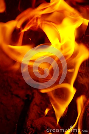 Free Campfire Illusion Of Rose Blossom Made Of Flames Stock Image - 115069011