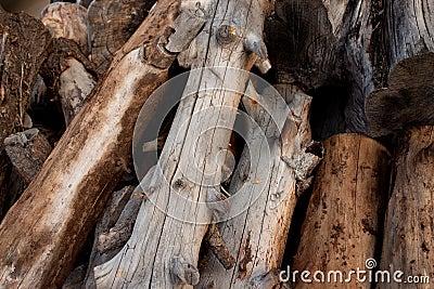 Campfire logs