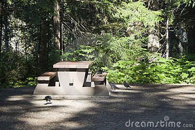 Campground with picnic table and birds