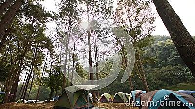 Camping en nature de forêt, camping et tente sous la forêt de pin dedans au pin Forest Park, Pang Ung Mae Hong Son, Thaïlande de  banque de vidéos