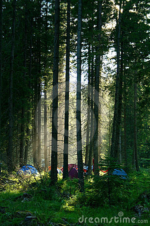 Free Camping In Forest Royalty Free Stock Image - 2905656