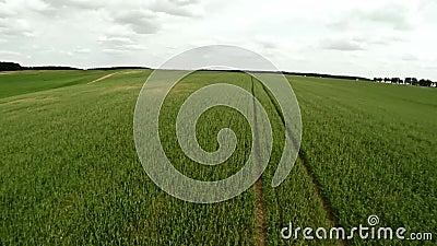 Campo agricultural Voo sobre o campo agrícola 71 filme