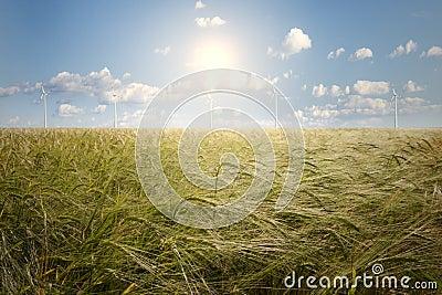 Campo da cevada e gerador de vento
