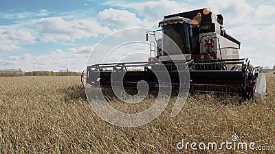Campo de explora??o agr?cola da cultura do cereal da agricultura da colheita da ceifeira de liga filme