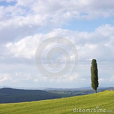 Campo de Toscânia e árvore de cipreste