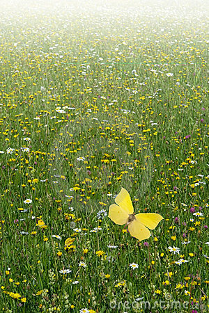 Campo del Wildflower