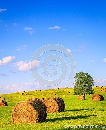 Campo di estate