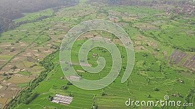 Campo do arroz de cima do zang?o do voo Plantação do arroz do verde da vista aérea em Guangxi, China Ind?stria agricultural culti filme
