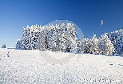 Campo e floresta de neve sob o céu azul com crescente