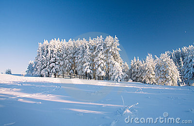 Campo e foresta di neve sotto cielo blu con la mezzaluna