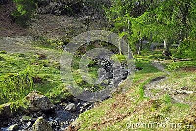 Campo inglês: rio no glade da floresta
