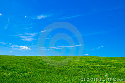 Campo verde 1