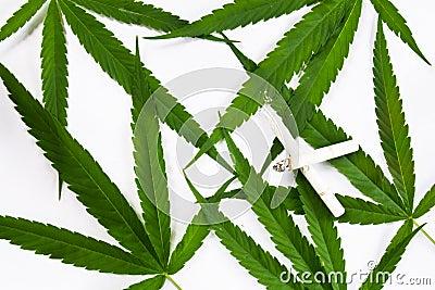Canabis leaf
