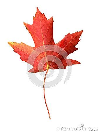 Canada flag symbol