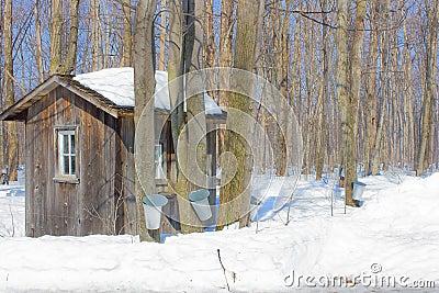 Canada sugar shack