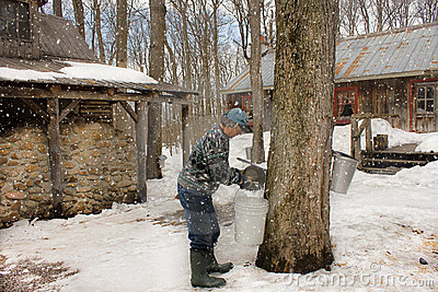 Canada sugar shack Editorial Stock Photo