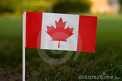 Canadian Flag in Grass
