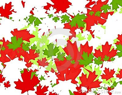 Canadian Maple Leaf Christmas Background