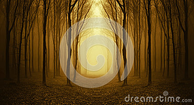 Canal de la trayectoria un bosque extraño con niebla en otoño