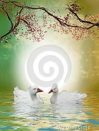 Canards dans le lac