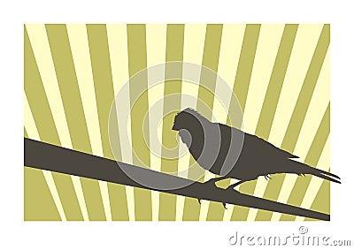 Canary bird 2