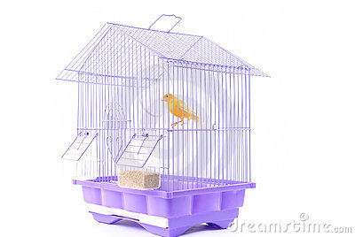 Canary In The Cage Royalty Free Stock Photos Image 4245408