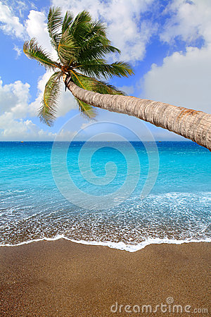 Canary Islands brown sand beach tropical aqua