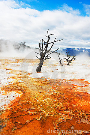 Free Canary Springs, Yellowstone Stock Images - 5468714