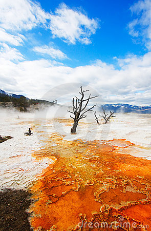 Free Canary Terraces, Yellowstone Stock Images - 5468694